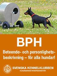 BPH-Tillyshundtjänst-186px