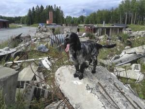 Tillys hundtjänst Helena Tilly