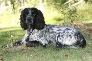 Hundens personlighet Tillys hundtjänst